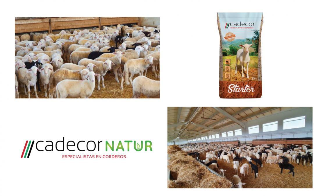 Grupo AGROVECO presenta el resultado de su proyecto CDTI de investigación AGROVET y su aplicación con su nueva línea de piensos de corderos CADECOR NATUR.
